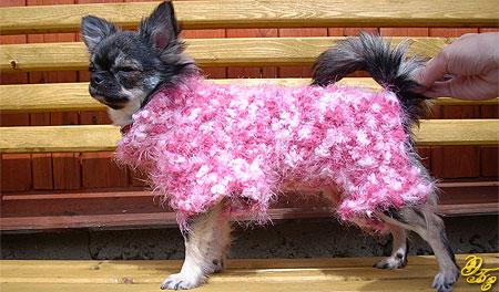 Метки: выкройки одежды для собак, выкройки одежды для чихуахуа.