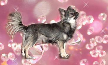 Royal canin gastro intestinal • Hitta lgsta pris